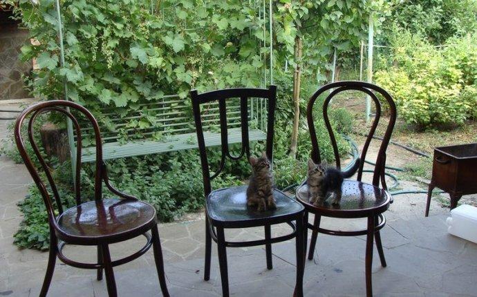 Продам: Старинные венские стулья - Купить: Старинные венские